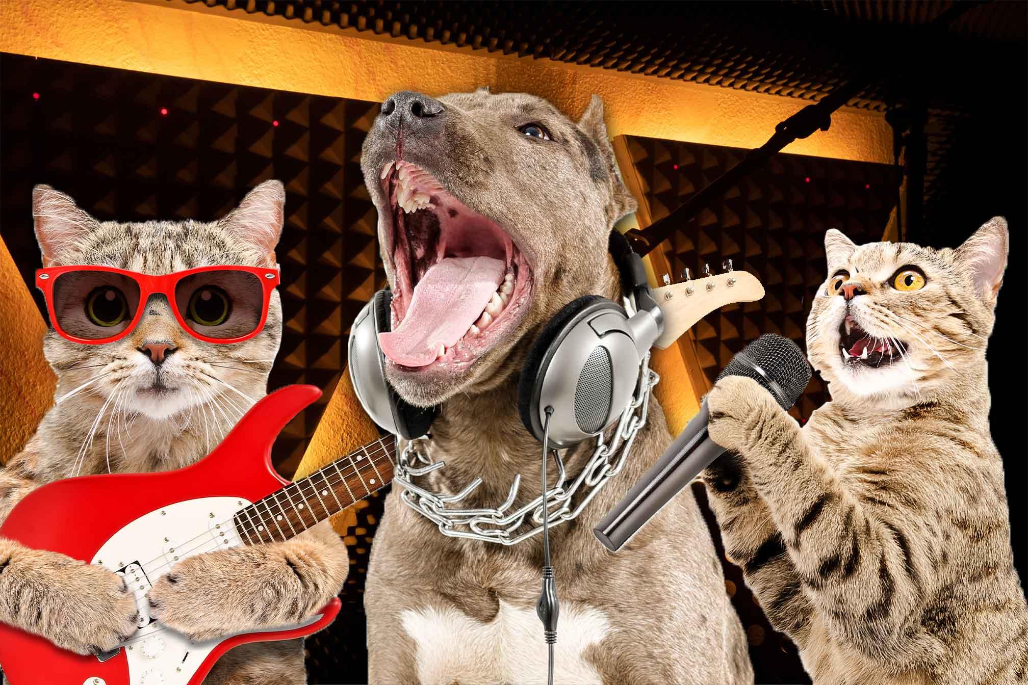 Tiere mit Instrumenten